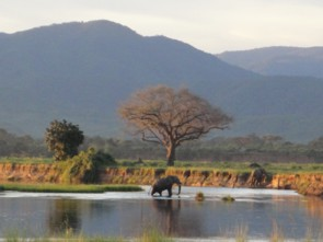 Zambezi-at-Mutsango Mana Pools ds