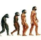 Human Evolution Crop