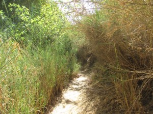 Along the path down the Banias or Hermon Stram