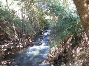 Banias or Hermon Stream 4 ds