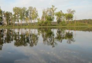 trees-and-lake